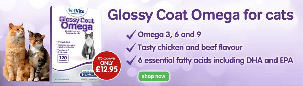 glossy coat cat